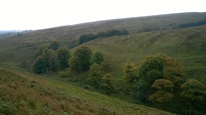 Fern Isle Wood
